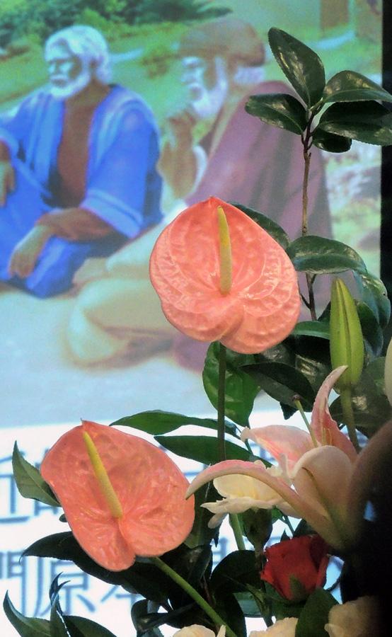 http://www.hpch.org.tw/photo/Photo.ashx?name=15c087cb-59d5-43cc-a352-b8cb8f26a420.jpg&photos=bc2ffbeb-1e9d-452f-8d6b-eeb00c05575d&category=2a6ebc6e-47d3-481f-afd7-ebf4de96ff16&id=ec9762f9-493e-46f1-aeb7-57f3d9d6fe14