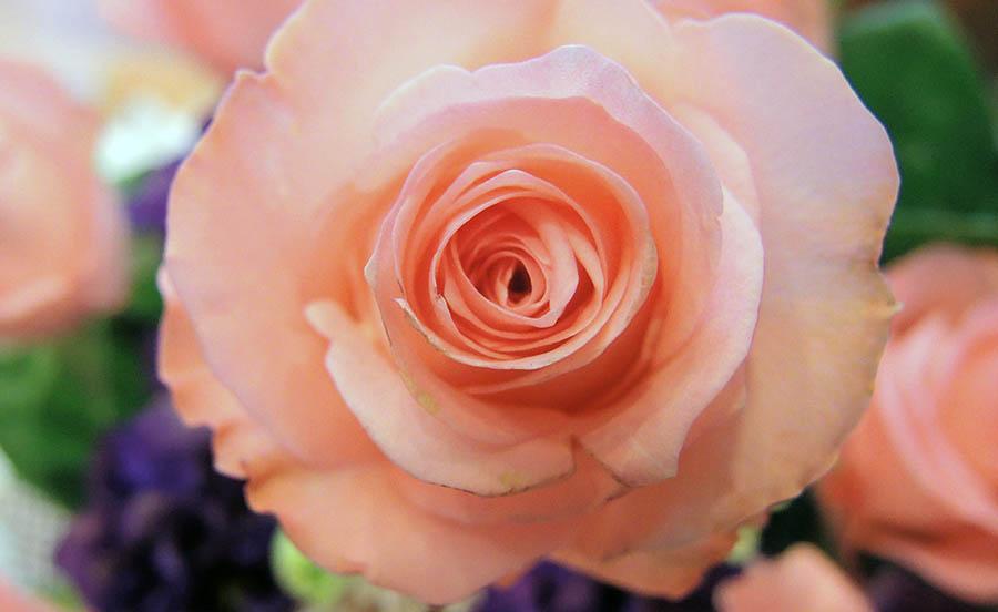 http://www.hpch.org.tw/photo/Photo.ashx?name=3dfaf550-da97-449e-9717-306c81dfdd85.jpg&photos=e1e5af09-34f4-487b-b90b-5b09bf2fdd43&category=2a6ebc6e-47d3-481f-afd7-ebf4de96ff16&id=b974d746-f24a-49cf-8d3d-394d9c94799b