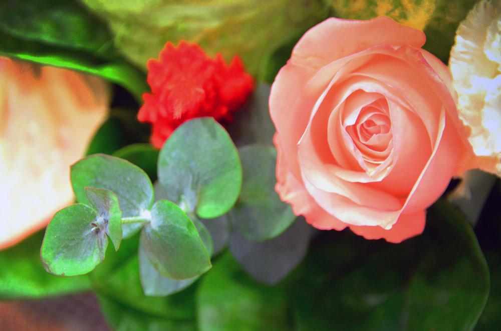 http://www.hpch.org.tw/photo/Photo.ashx?name=4e39f707-0f46-420a-985a-531ac2d96db0.jpg&photos=11e1dc6f-cf09-4518-ad0e-baa8a478fc8b&category=2a6ebc6e-47d3-481f-afd7-ebf4de96ff16&id=bb8f619b-0139-4921-8ca4-7253ebcf5a7b
