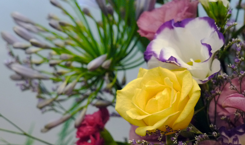 http://www.hpch.org.tw/photo/Photo.ashx?name=da25483e-d3ce-4142-a303-fac33c22cf55.jpg&photos=f55cd13d-2f36-4d29-87d7-9ec6d56aa117&category=2a6ebc6e-47d3-481f-afd7-ebf4de96ff16&id=f6b861df-6ab2-46c4-8770-619f55f11ecc